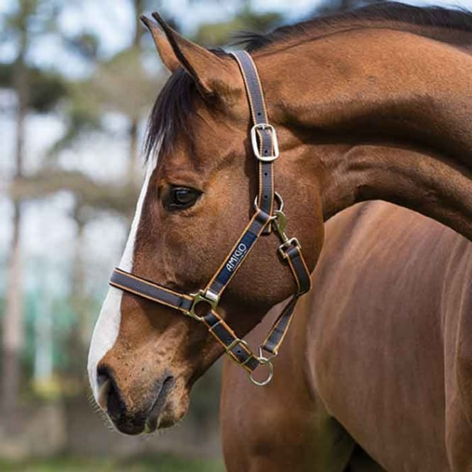 Amigo Headcollar Excalibur/Orange