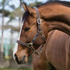 Headcollar Excalibur/Orange
