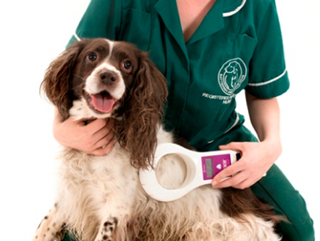 Dog Microchipping
