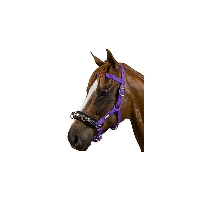 Kincade Equigrip 4 Piece Lunge Kit Purple At Burnhills