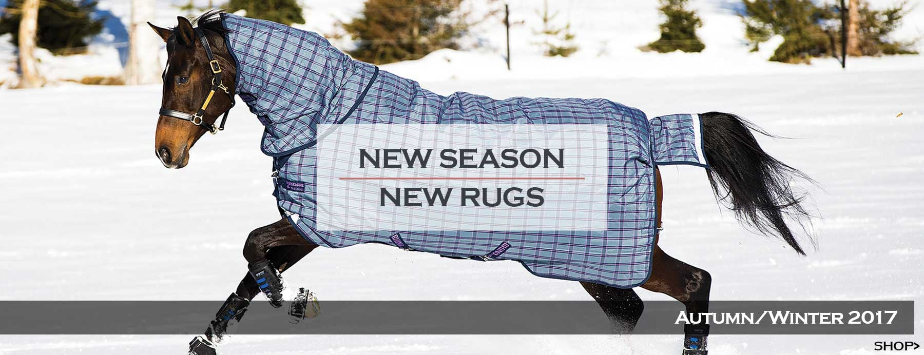 AW17 Rugs