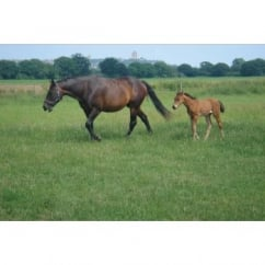 Monarch Equipaddock Grass Seed - Horse & Pony Paddock Mixture 10Kg