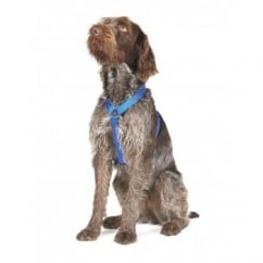 Nylon Dog Harness Blue
