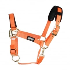 Brights Padded Headcollar Orange